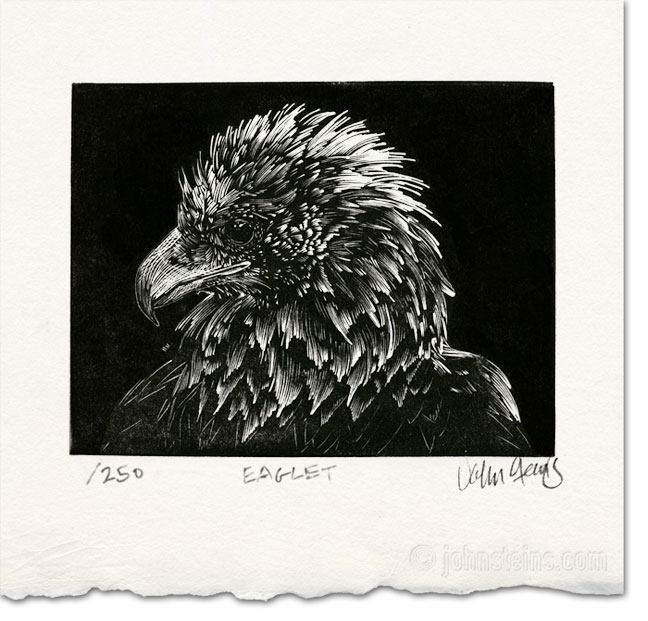 Eaglet by John Steins
