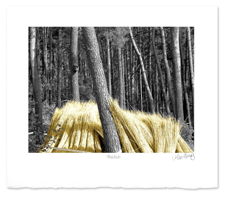 Thatch ~ John Steins